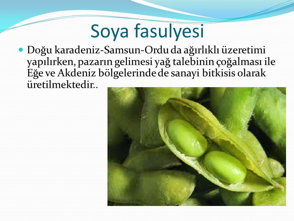 Soya fasulyesi