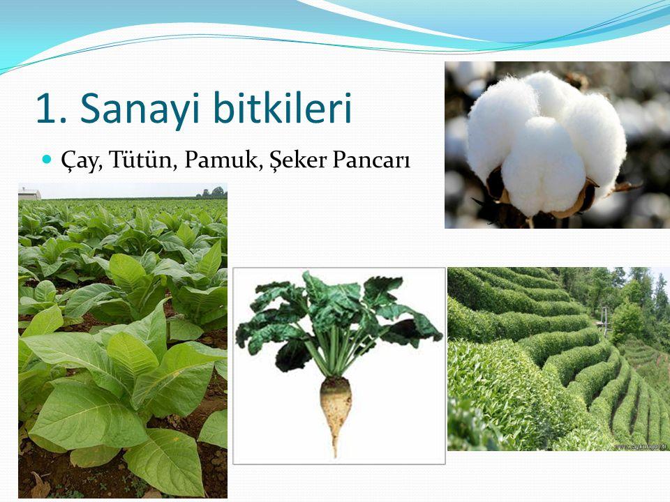 1. Sanayi bitkileri Çay, Tütün, Pamuk, Şeker Pancarı