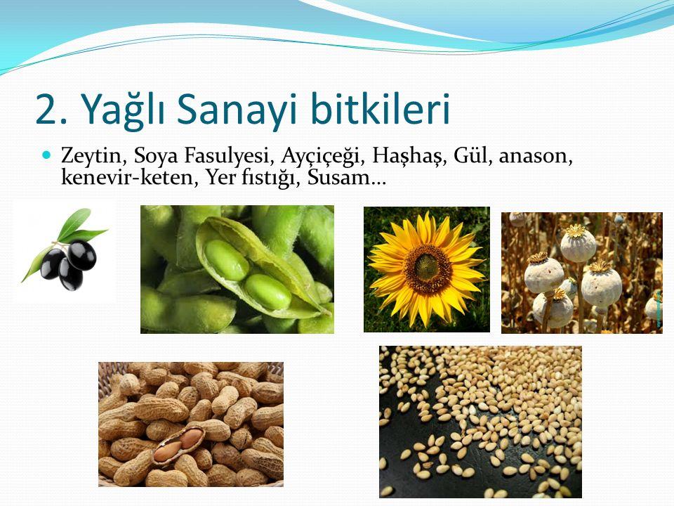 2. Yağlı Sanayi bitkileri