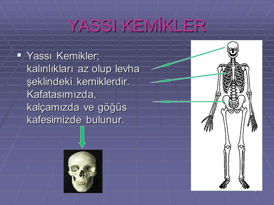 YASSI KEMİKLER Yassı Kemikler; kalınlıkları az olup levha şeklindeki kemiklerdir.