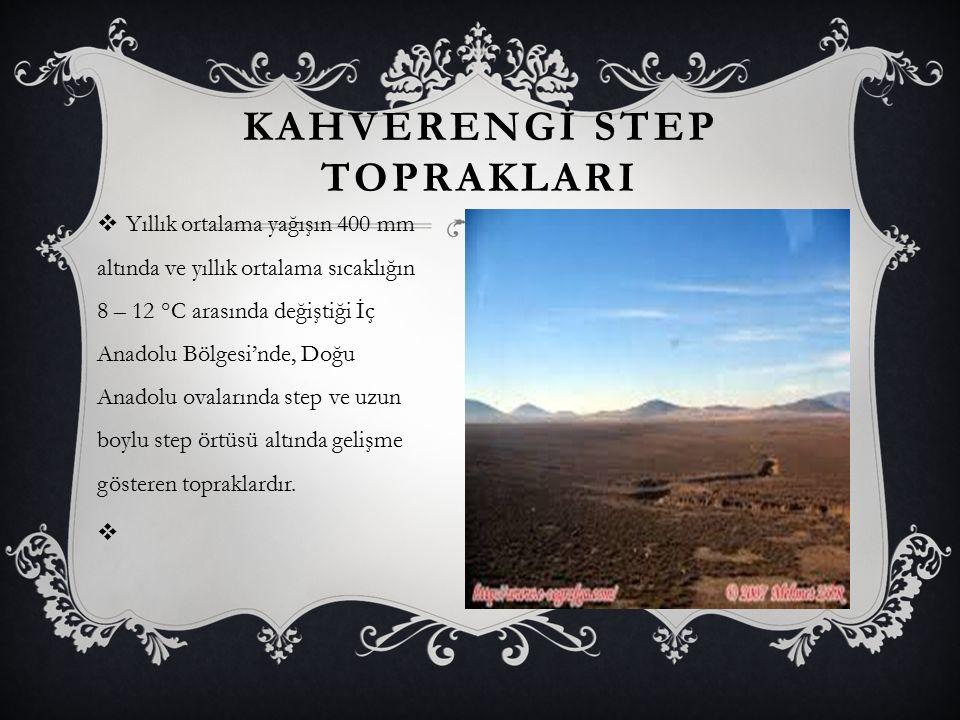 KAHVERENGİ STEP TOPRAKLARI