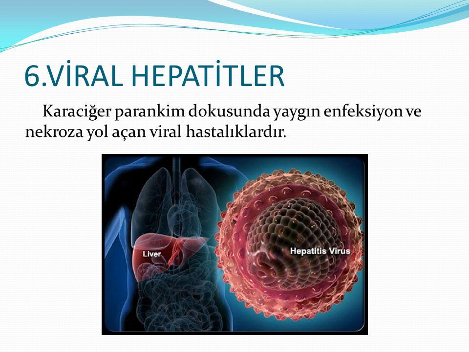 6.VİRAL HEPATİTLER Karaciğer parankim dokusunda yaygın enfeksiyon ve nekroza yol açan viral hastalıklardır.