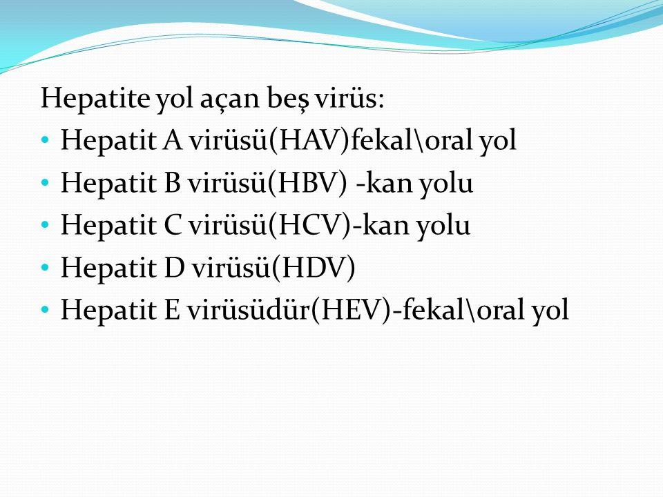 Hepatite yol açan beş virüs: