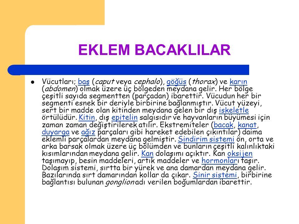 EKLEM BACAKLILAR