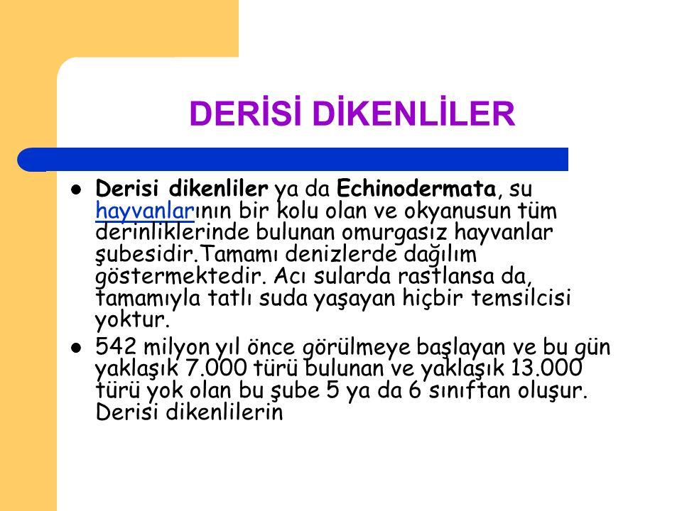DERİSİ DİKENLİLER