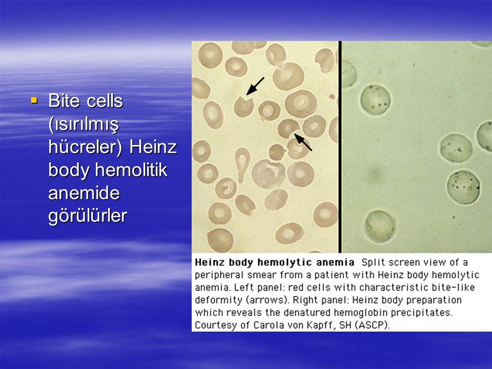 Bite cells (ısırılmış hücreler) Heinz body hemolitik anemide görülürler