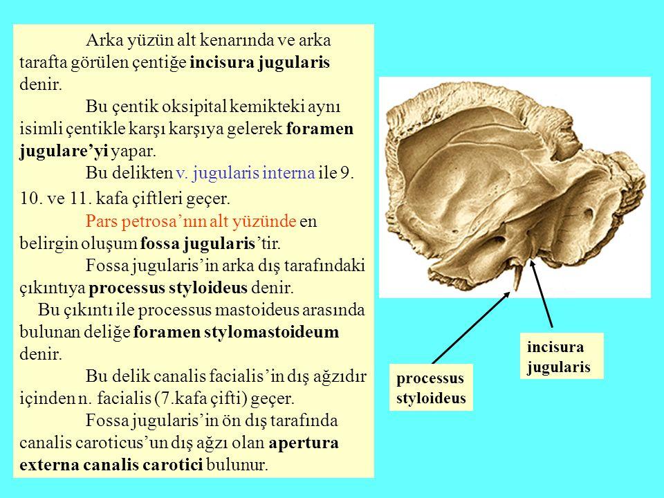 Pars petrosa'nın alt yüzünde en belirgin oluşum fossa jugularis'tir.