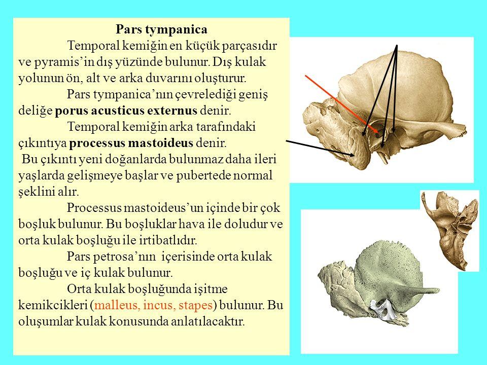 Pars tympanica Temporal kemiğin en küçük parçasıdır ve pyramis'in dış yüzünde bulunur. Dış kulak yolunun ön, alt ve arka duvarını oluşturur.