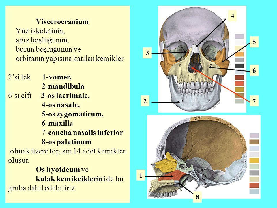 orbitanın yapısına katılan kemikler 2'si tek 1-vomer, 2-mandibula
