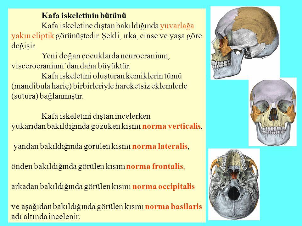 Kafa iskeletinin bütünü