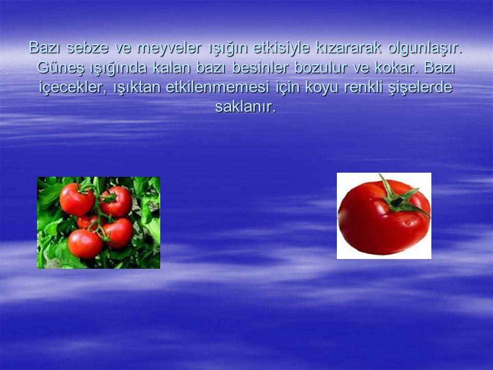 Bazı sebze ve meyveler ışığın etkisiyle kızararak olgunlaşır