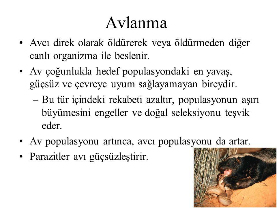 Avlanma Avcı direk olarak öldürerek veya öldürmeden diğer canlı organizma ile beslenir.