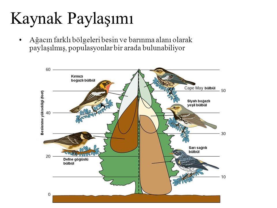 Kaynak Paylaşımı Ağacın farklı bölgeleri besin ve barınma alanı olarak paylaşılmış, populasyonlar bir arada bulunabiliyor.