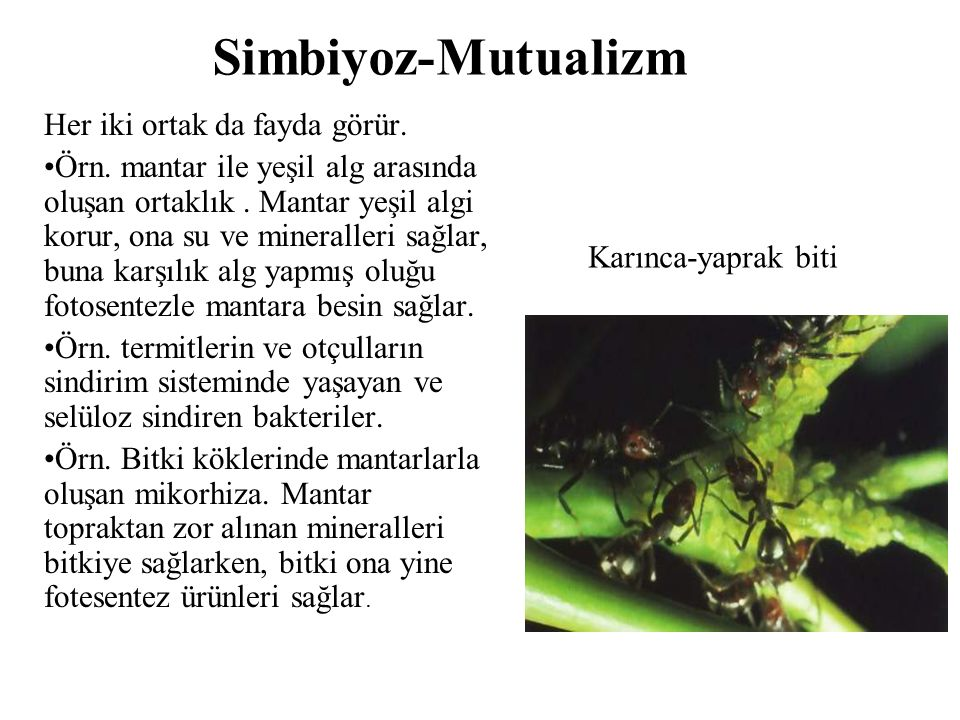 Simbiyoz-Mutualizm Her iki ortak da fayda görür.