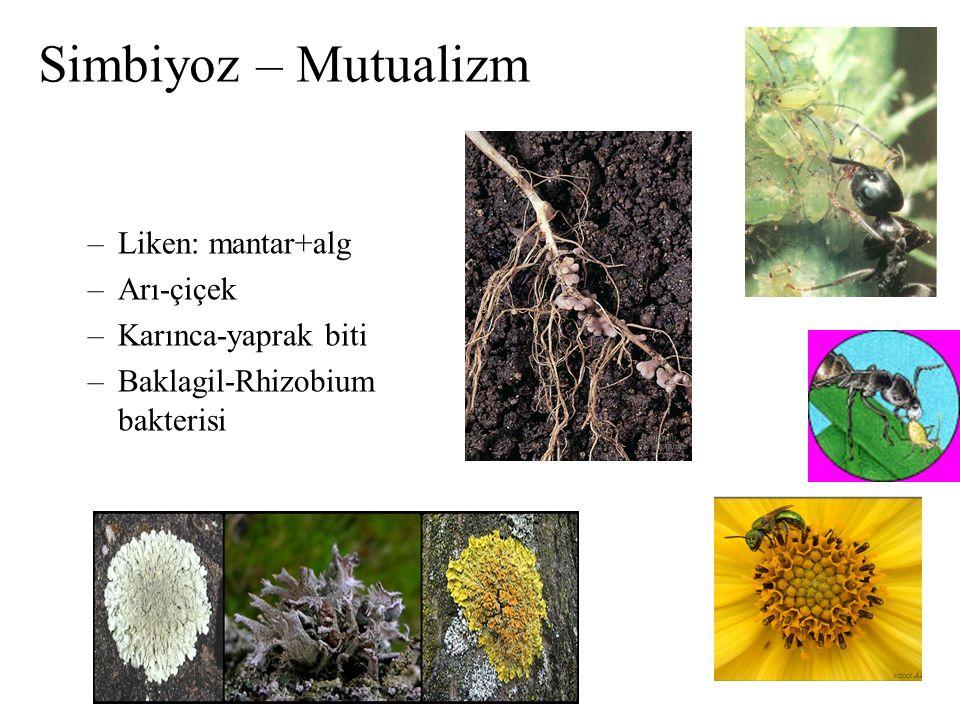 Simbiyoz – Mutualizm Liken: mantar+alg Arı-çiçek Karınca-yaprak biti