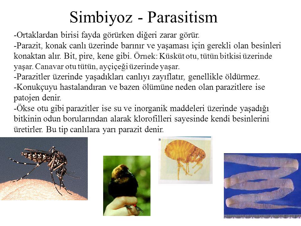 Simbiyoz - Parasitism -Ortaklardan birisi fayda görürken diğeri zarar görür.