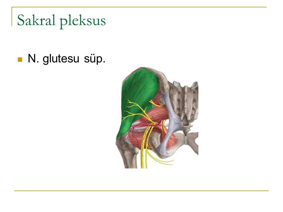 Sakral pleksus N. glutesu süp.