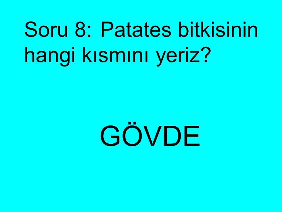 Soru 8: Patates bitkisinin hangi kısmını yeriz