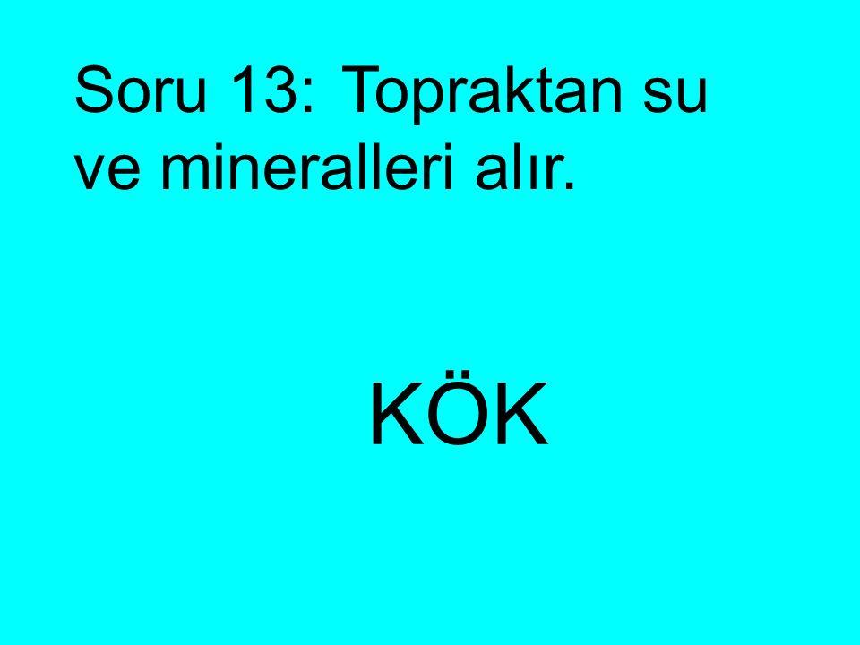 Soru 13: Topraktan su ve mineralleri alır.