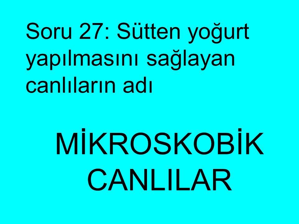 Soru 27: Sütten yoğurt yapılmasını sağlayan canlıların adı