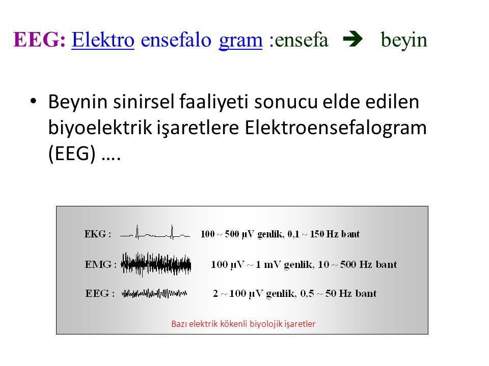 EEG: Elektro ensefalo gram :ensefa  beyin