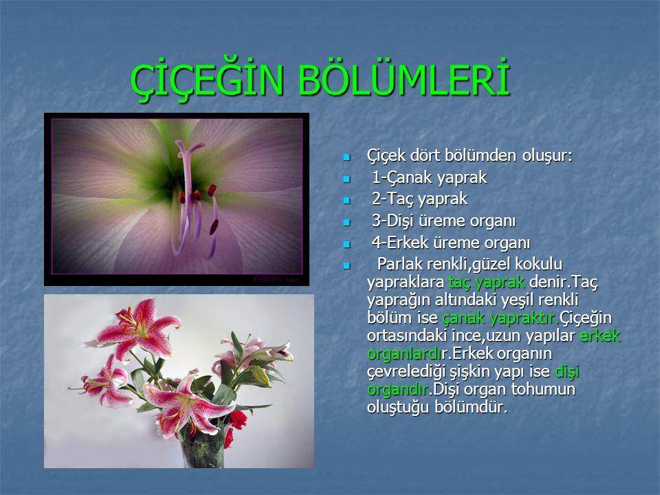ÇİÇEĞİN BÖLÜMLERİ Çiçek dört bölümden oluşur: 1-Çanak yaprak