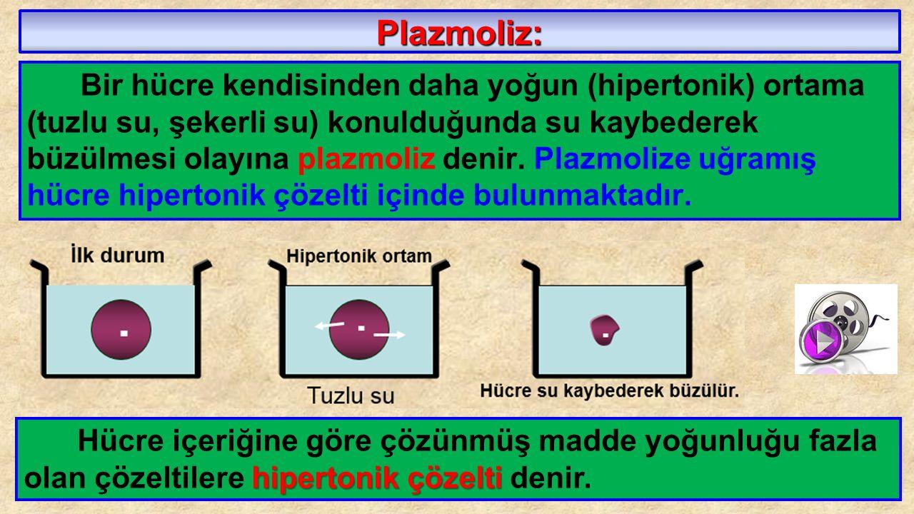 Plazmoliz: