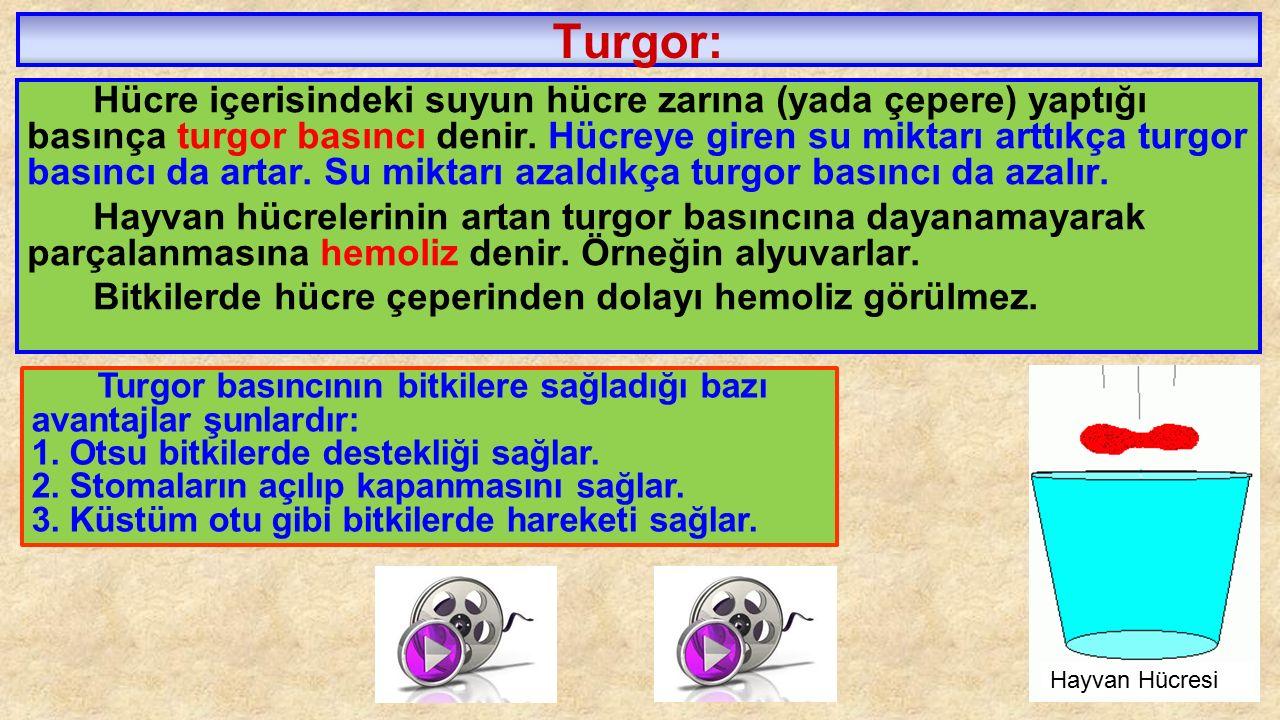 Turgor: