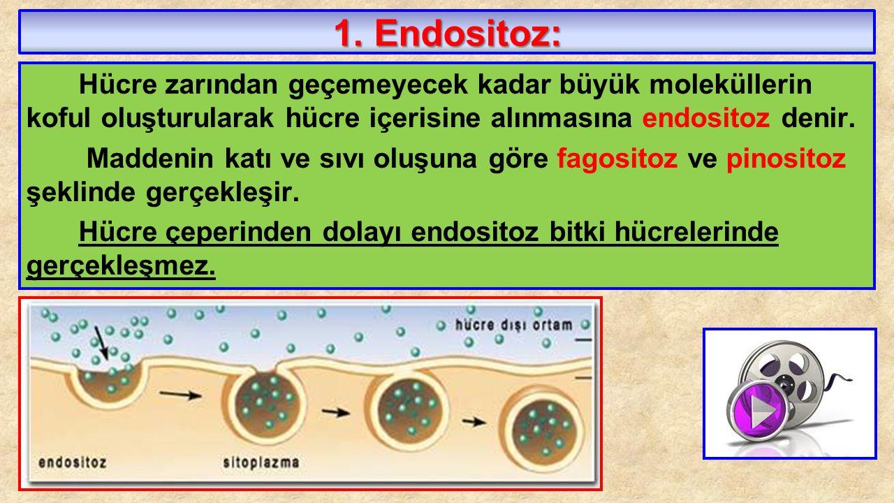 1. Endositoz: Hücre zarından geçemeyecek kadar büyük moleküllerin koful oluşturularak hücre içerisine alınmasına endositoz denir.