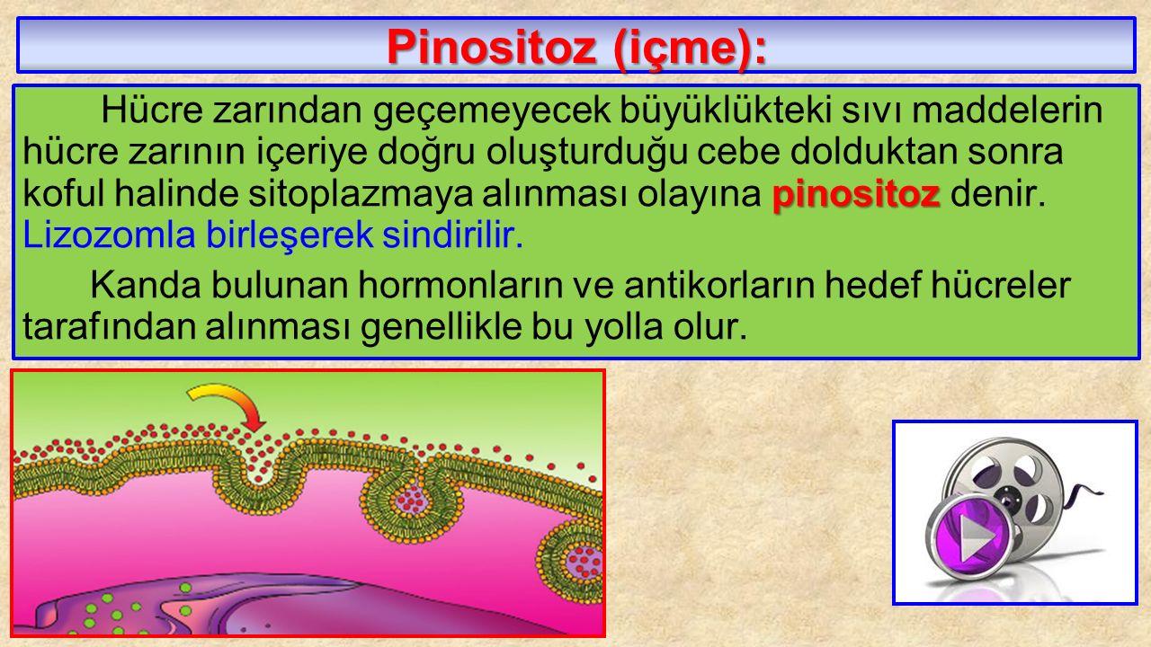 Pinositoz (içme):