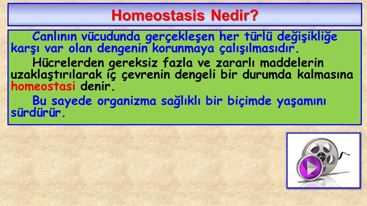 Homeostasis Nedir Canlının vücudunda gerçekleşen her türlü değişikliğe karşı var olan dengenin korunmaya çalışılmasıdır.