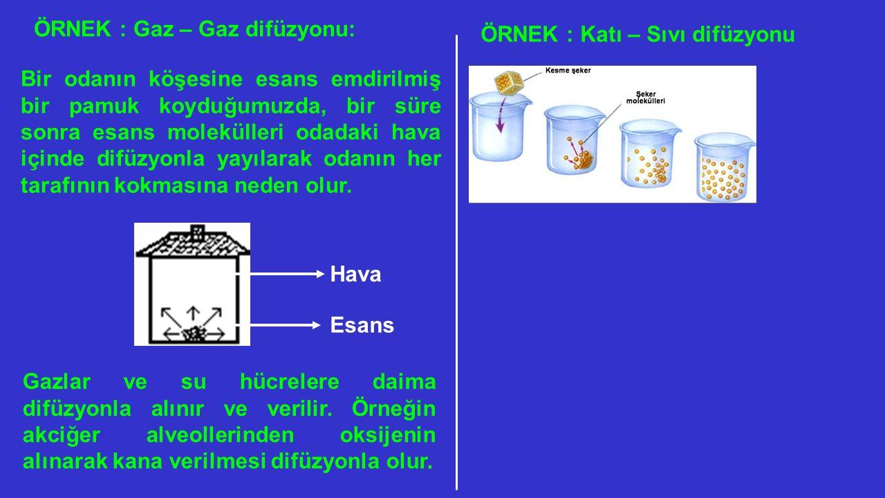 ÖRNEK : Gaz – Gaz difüzyonu: