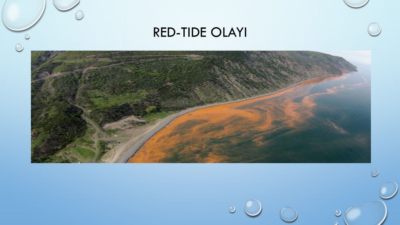 RED-TIDE OLAYI