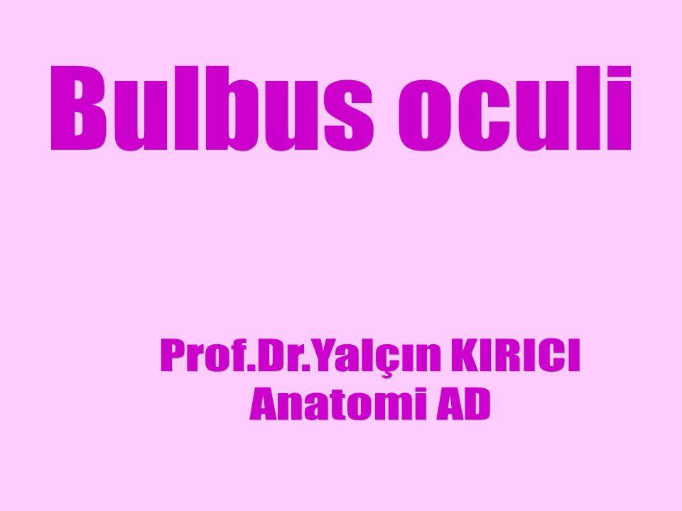 Bulbus oculi Prof.Dr.Yalçın KIRICI Anatomi AD