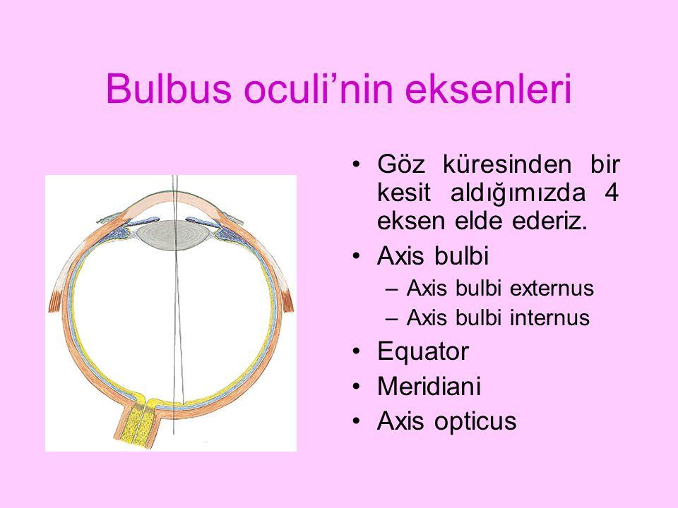 Bulbus oculi'nin eksenleri