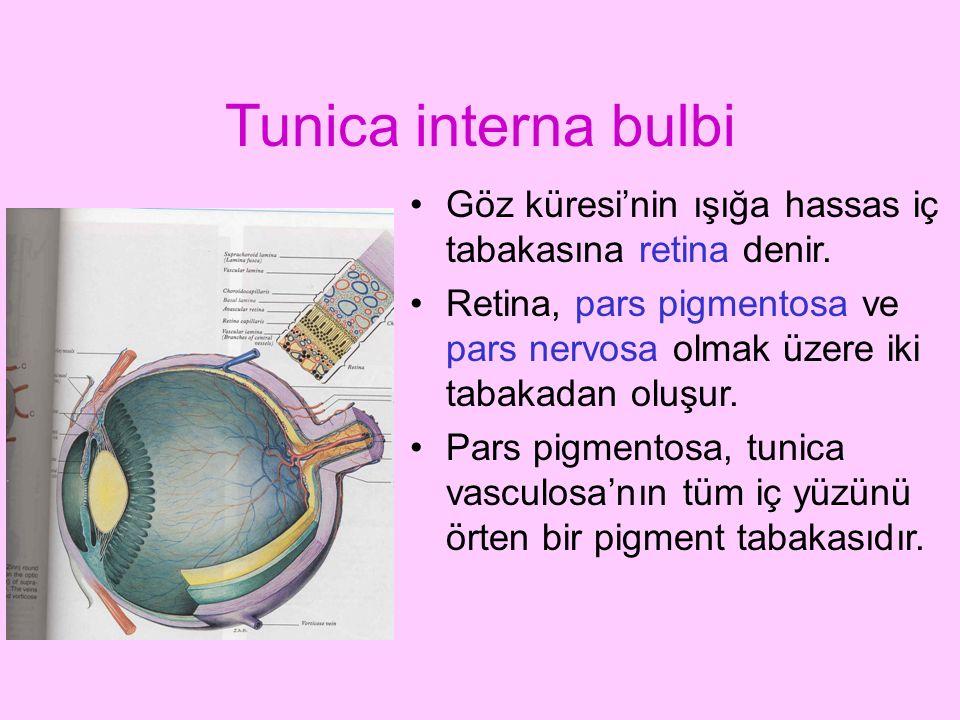 Tunica interna bulbi Göz küresi'nin ışığa hassas iç tabakasına retina denir.
