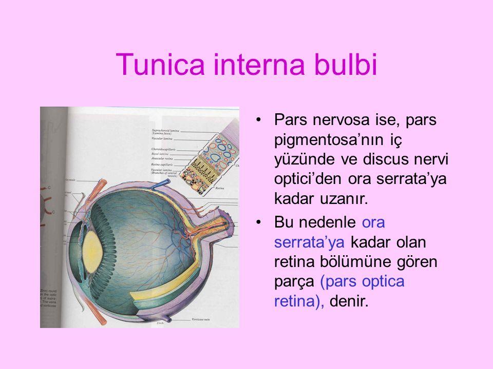 Tunica interna bulbi Pars nervosa ise, pars pigmentosa'nın iç yüzünde ve discus nervi optici'den ora serrata'ya kadar uzanır.