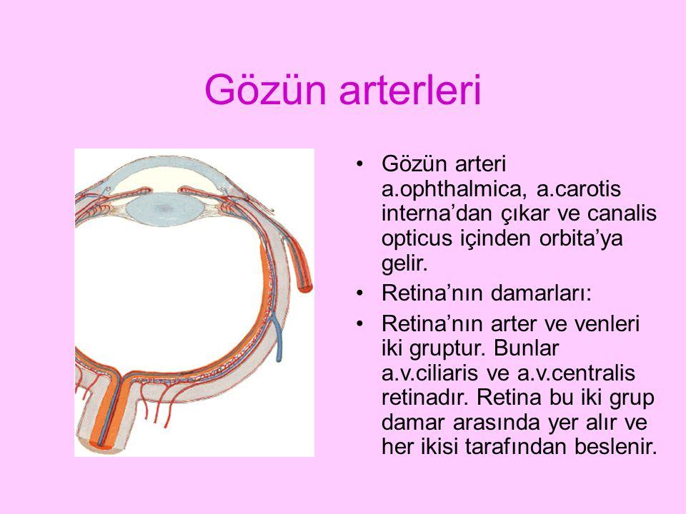 Gözün arterleri Gözün arteri a.ophthalmica, a.carotis interna'dan çıkar ve canalis opticus içinden orbita'ya gelir.