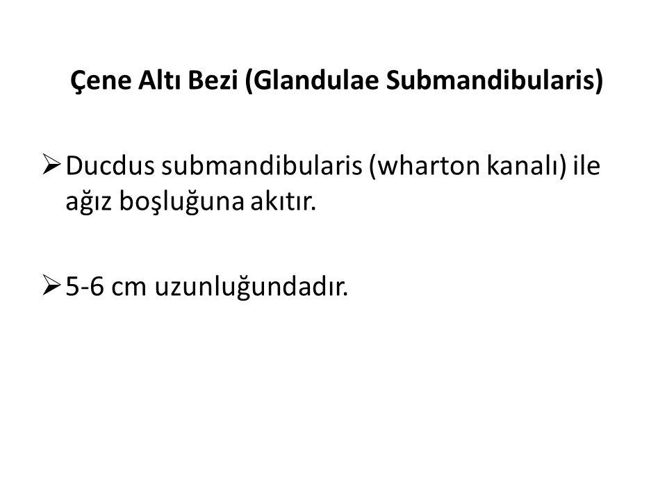 Çene Altı Bezi (Glandulae Submandibularis)