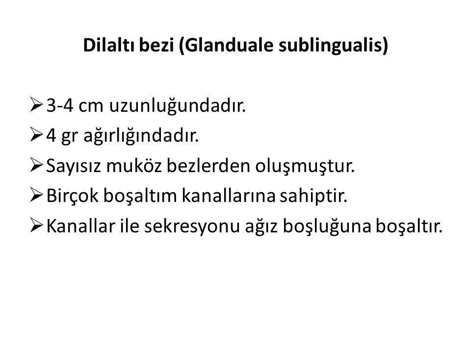 Dilaltı bezi (Glanduale sublingualis)