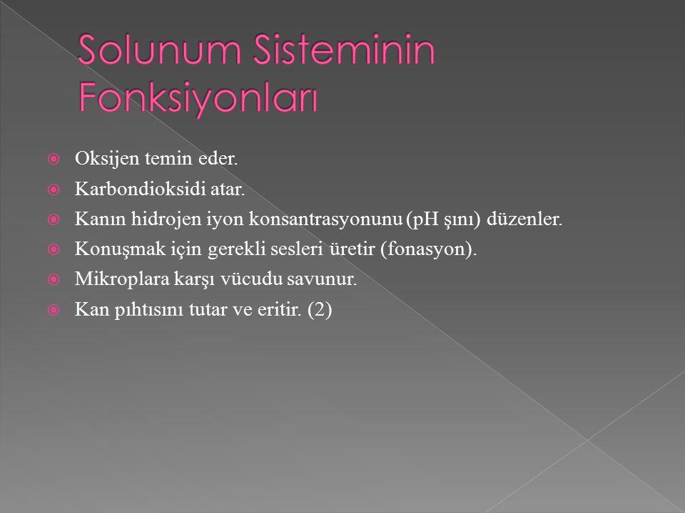 Solunum Sisteminin Fonksiyonları