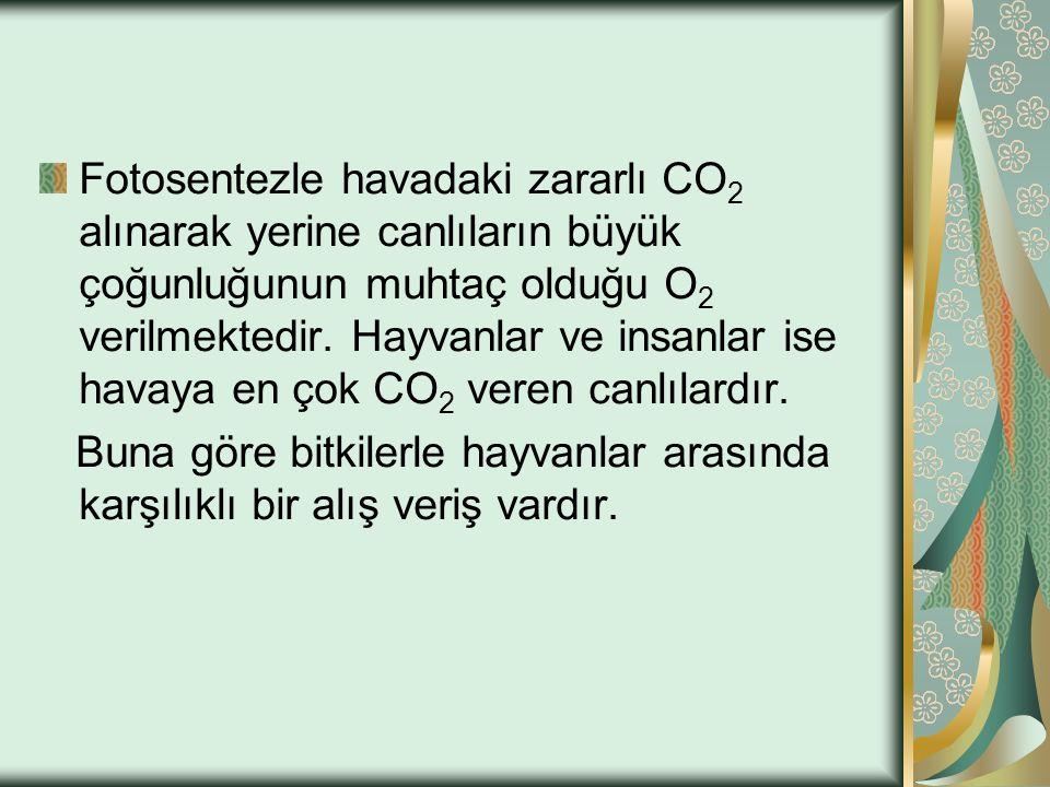 Fotosentezle havadaki zararlı CO2 alınarak yerine canlıların büyük çoğunluğunun muhtaç olduğu O2 verilmektedir. Hayvanlar ve insanlar ise havaya en çok CO2 veren canlılardır.