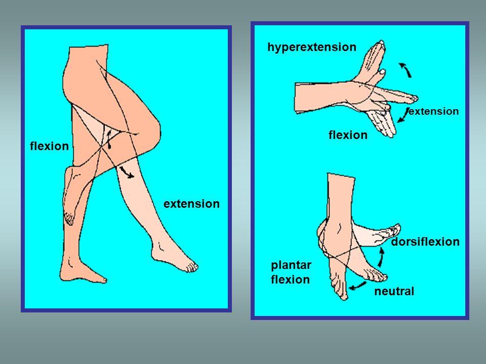 hyperextension flexion flexion extension dorsiflexion plantar flexion