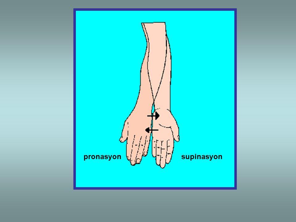 pronasyon supinasyon