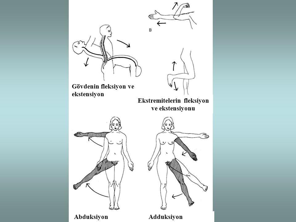 Ekstremitelerin fleksiyon ve ekstensiyonu