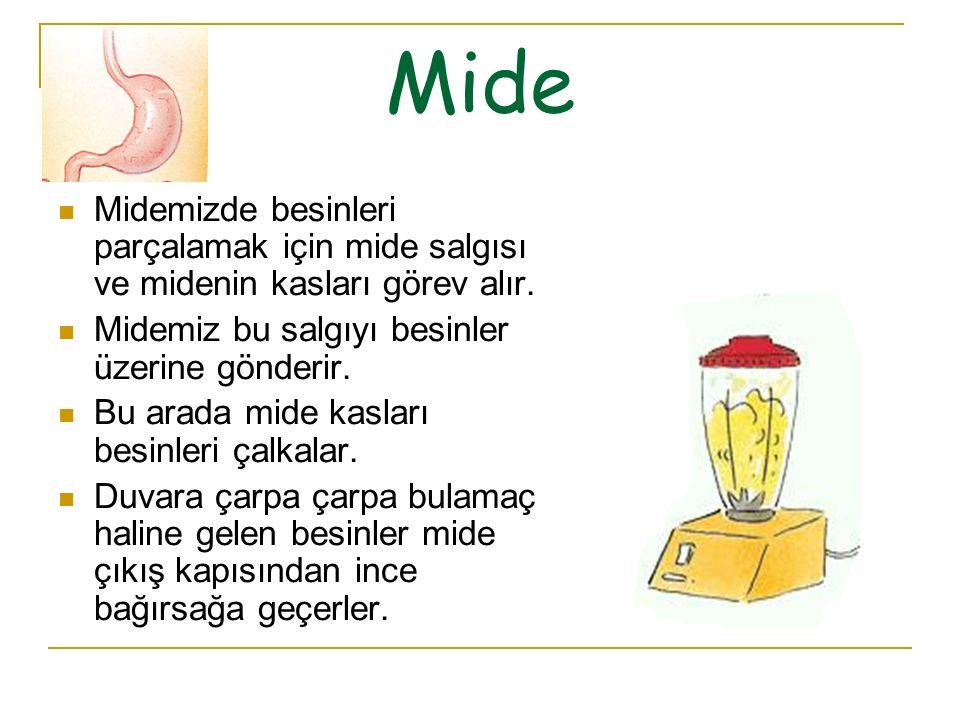 Mide Midemizde besinleri parçalamak için mide salgısı ve midenin kasları görev alır. Midemiz bu salgıyı besinler üzerine gönderir.