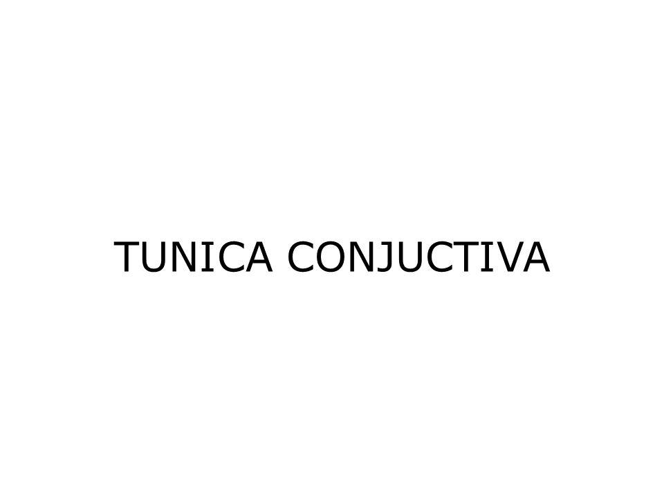 TUNICA CONJUCTIVA