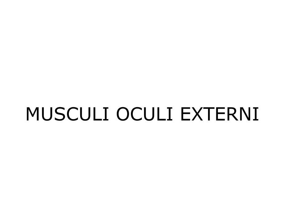 MUSCULI OCULI EXTERNI