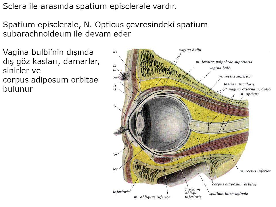 Sclera ile arasında spatium episclerale vardır.