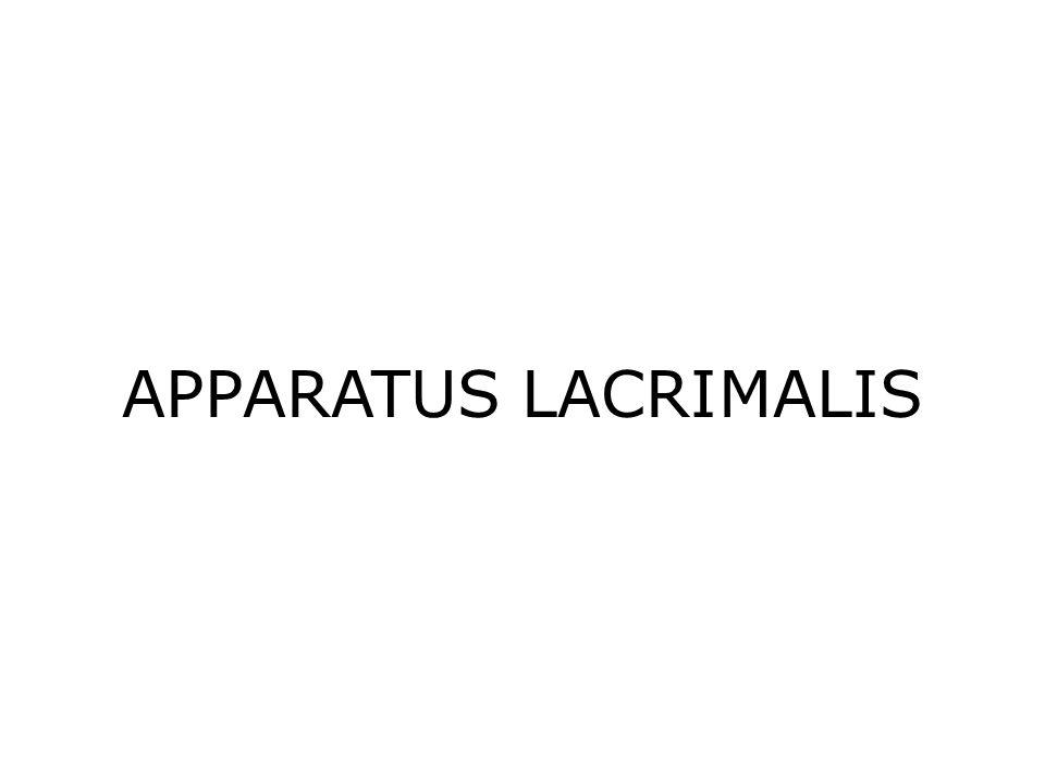 APPARATUS LACRIMALIS